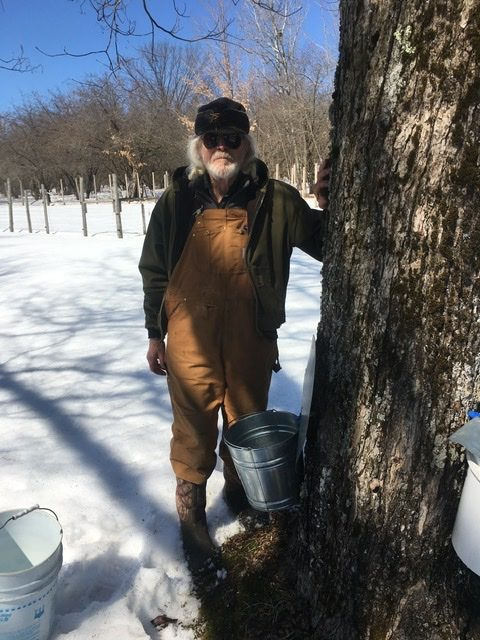 Dad tapping trees for syrup